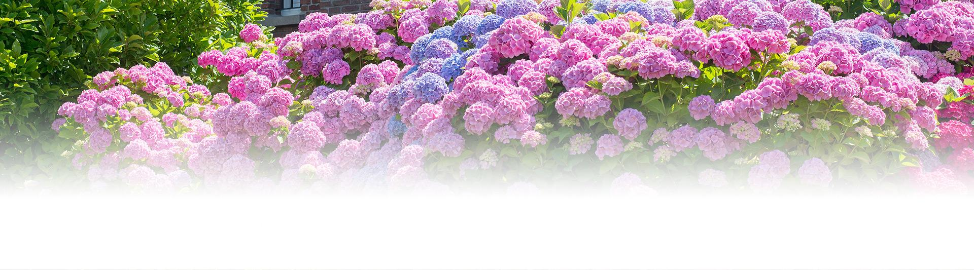 Ogród kwiatów