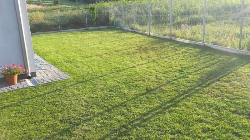 ogródek 20