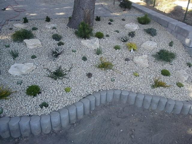 roślinka z kamyczkami